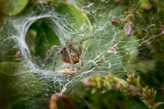 Aranha marrom na teia de aranha close-up