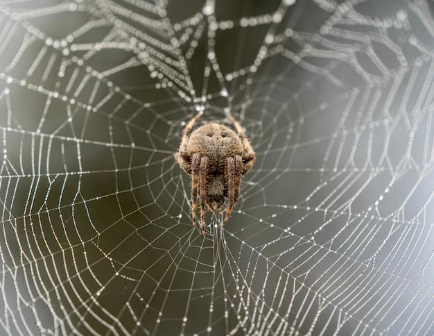 Aranha marrom subindo em uma teia de aranha com um fundo desfocado