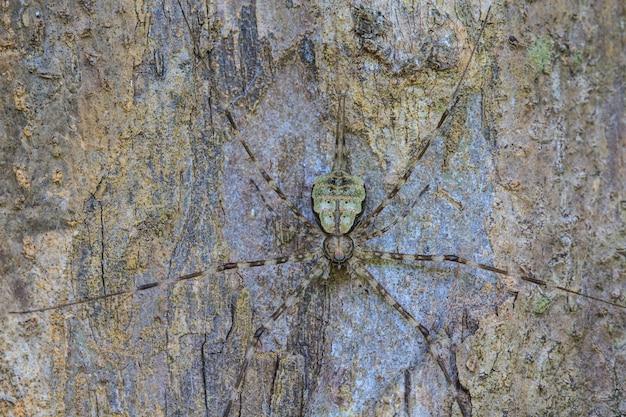 Aranha na floresta