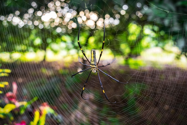 Aranha na teia de aranha na natureza de bokeh