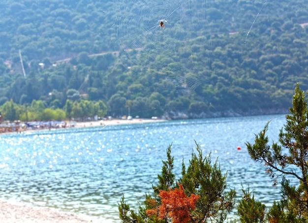 Aranha na teia de aranha no fundo da praia de verão, grécia, kefalonia.