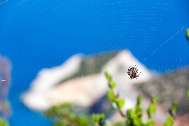 Aranha na teia e verão na costa de porto katsiki no mar jônico (lefkada, grécia) atrás