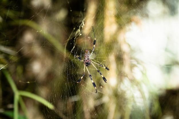 Aranha na web com fundo desfocado