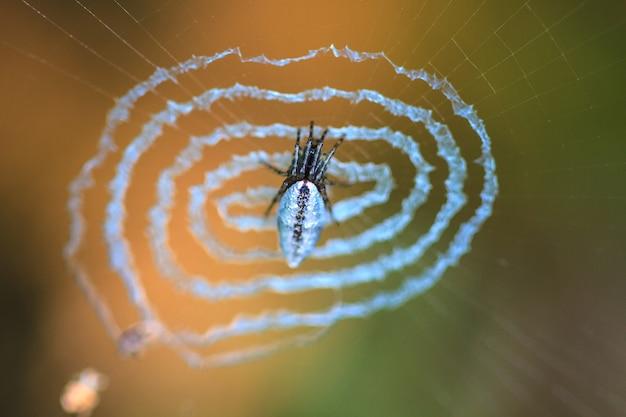 Aranha na web.