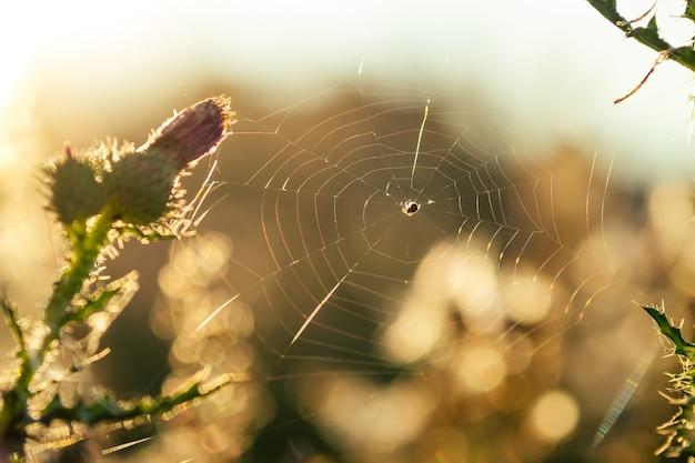Aranha no campo teia de aranha do dia de verão