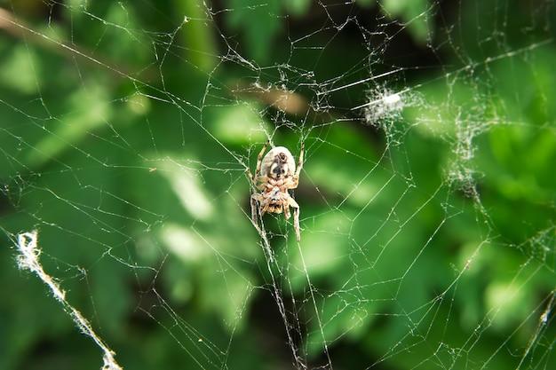 Aranha perto de um fundo verde
