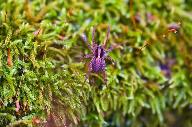 Aranha que rasteja através da grama na floresta.