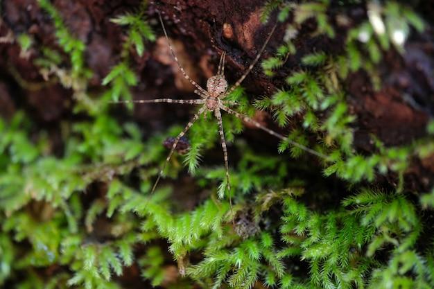 Aranha selvagem em seu habitat de floresta