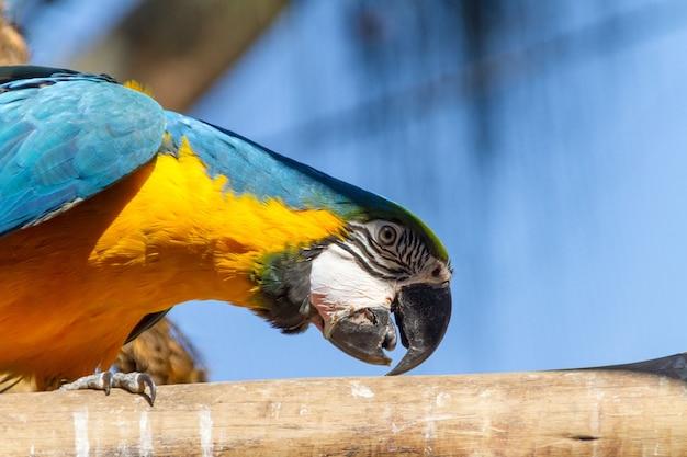Arara apoiada em um galho de árvore ao ar livre no rio de janeiro, brasil.