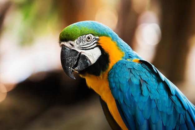 Arara azul-e-amarela [ara ararauna] sentado no log