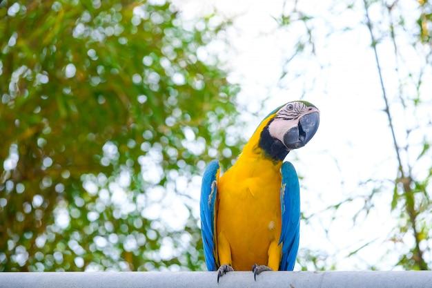 Arara azul e amarela e céu branco