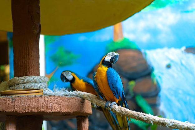 Arara-papagaio amarelo azul sentado no galho.