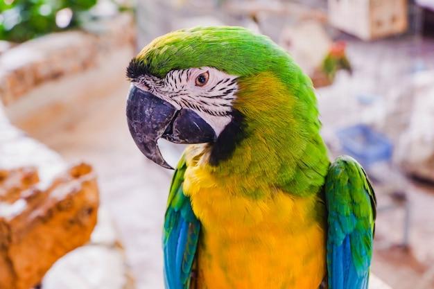 Arara pássaro