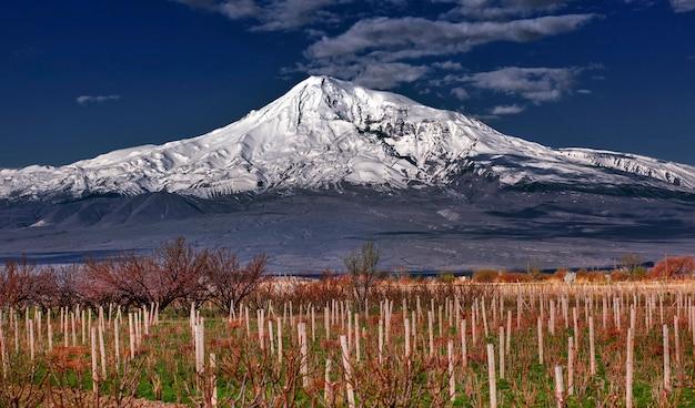 Ararat nas nuvens e na vinha