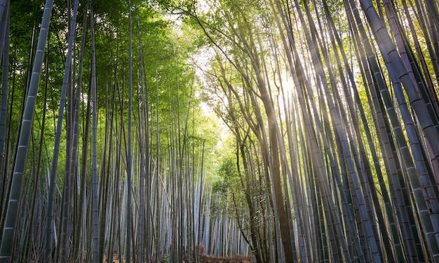 Arashiyama bamboo grove, distrito nos arredores ocidentais de kyoto, japão