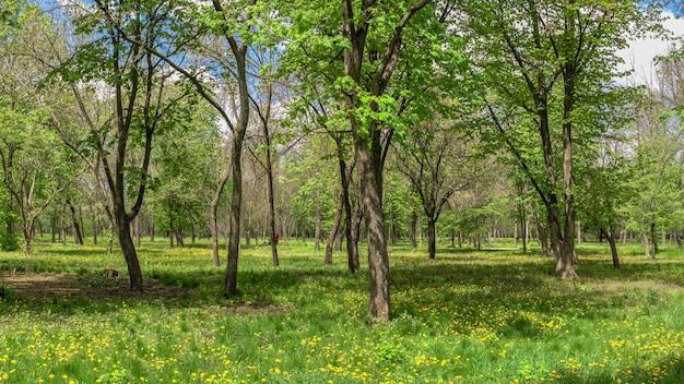 Arboreto de kropyvnytskyi no parque da cidade em um dia ensolarado de primavera