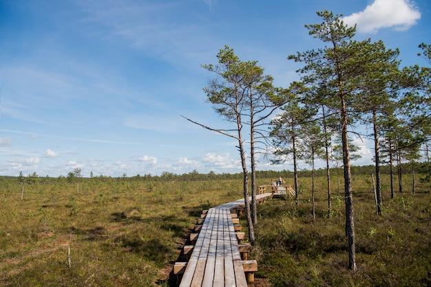 Arborizado estrada a pé no pântano em dia ensolarado de verão.
