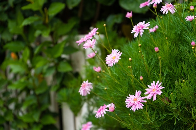 Arbusto com delicadas flores rosa