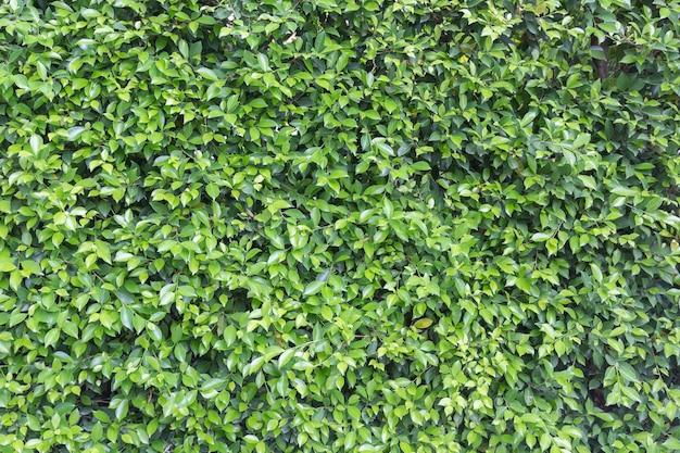 Arbusto de árvore verde