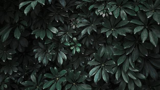 Arbusto de planta escura