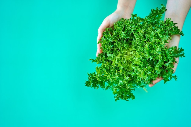 Arbusto de salada de alface verde fresca nas mãos sobre fundo verde.