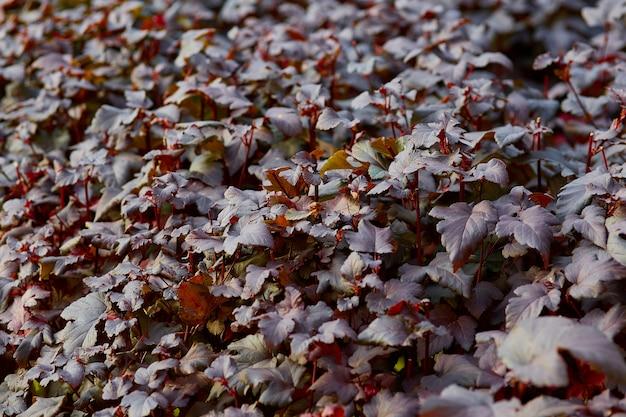 Arbusto escuro padrão close-up no outono