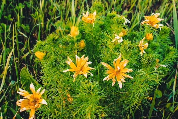 Arbusto flor campo amarelo e branco