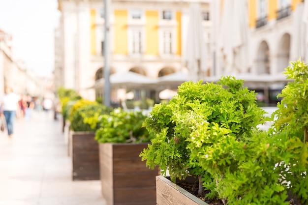 Arbusto na rua na rua europeia de perto, portugal