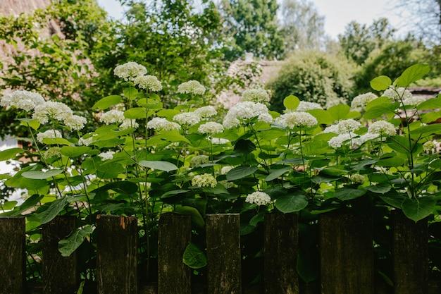 Arbustos das montanhas perto da cerca
