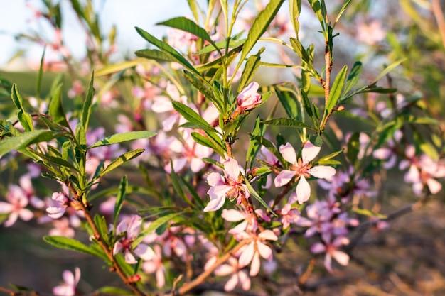 Arbustos de flores rosa
