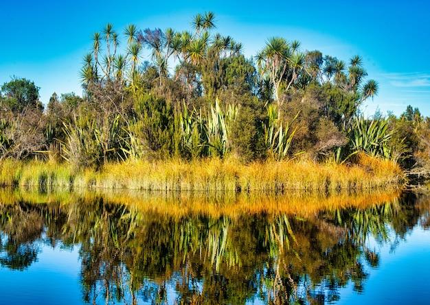 Arbustos de linho, árvores de repolho, juncos e outras vegetações refletidas nas águas paradas da lagoa de okarito