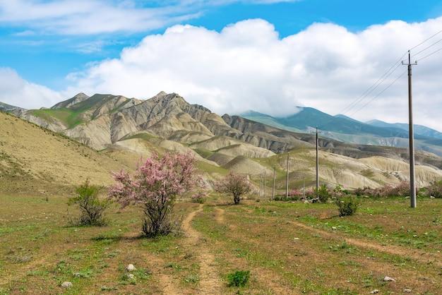Arbustos de tamarix florescendo em um vale na montanha