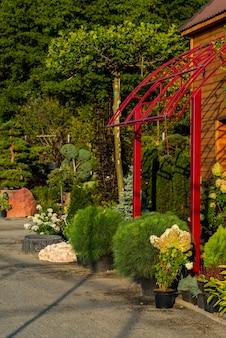 Arbustos redondos e arbustos de seleção aparados com flores para o paisagismo