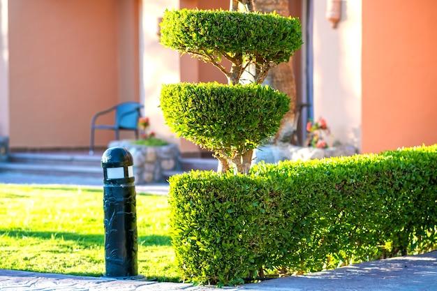 Arbustos verdes brilhantes com folhas verdes vibrantes crescendo no jardim de verão.