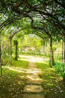 Arco caminho verde suave natural