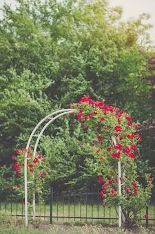 Arco de flor com rosas vermelhas de escalada