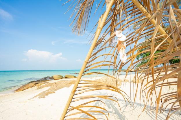 Arco de folha de coco na praia, férias de verão relaxante tempo