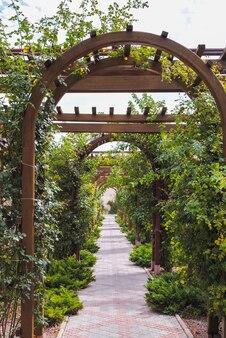 Arco de madeira de plantas sobre um caminho de um azulejo que sai em perspectiva à tarde