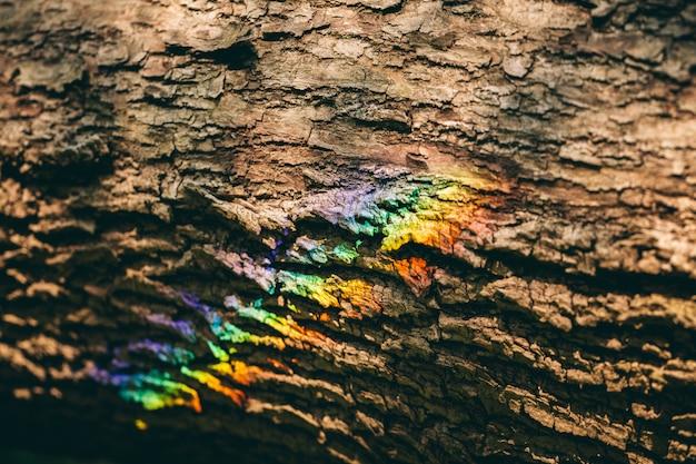 Arco-íris colorido que reflete em uma casca de uma árvore.