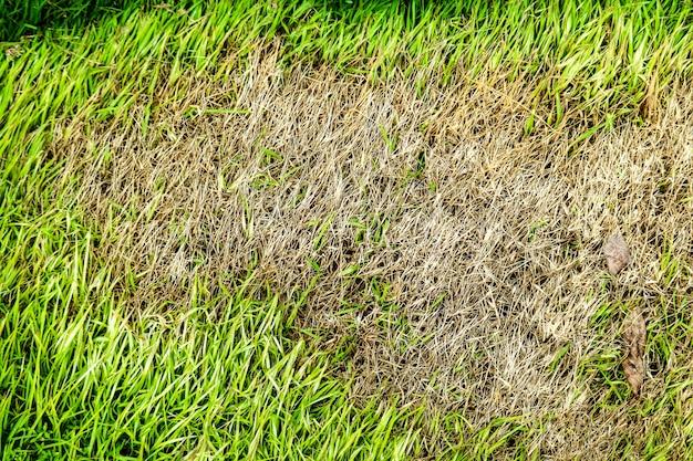 Área de grama seca não pode crescer, algo cobrir isso e não tem luz do sol