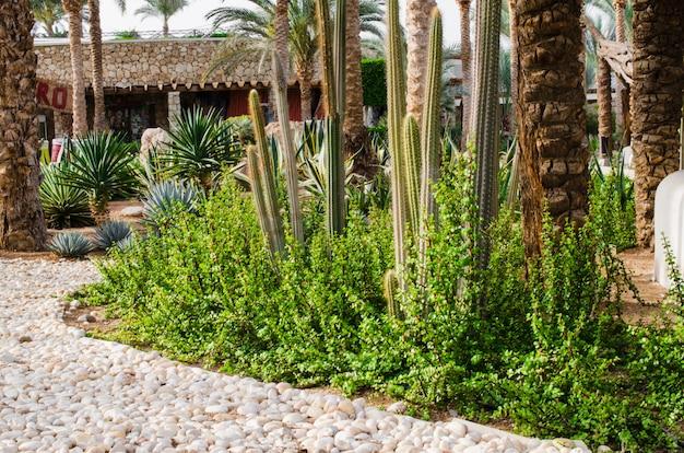 Área de parque bem cuidada com palmeiras e cactos.