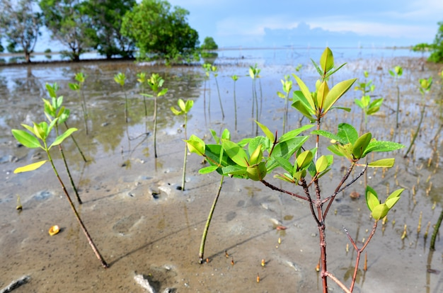 Área de pequenos manguezais.