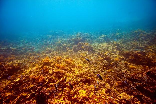 Área de recife de coral