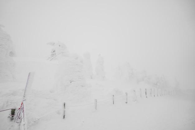 Área de snow monsters montanha zao, japão