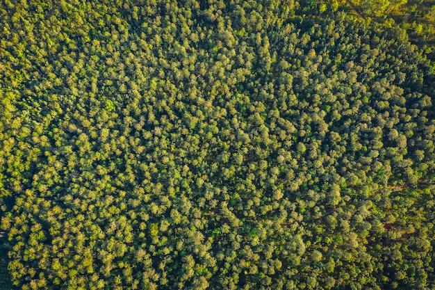 Área de utopia de floresta de pinheiros vista aérea superior em chiang mai tailândia