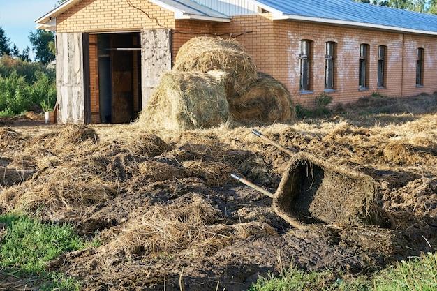 Área do estábulo com excrementos de animais e carrinho de mão sujo na fazenda russa