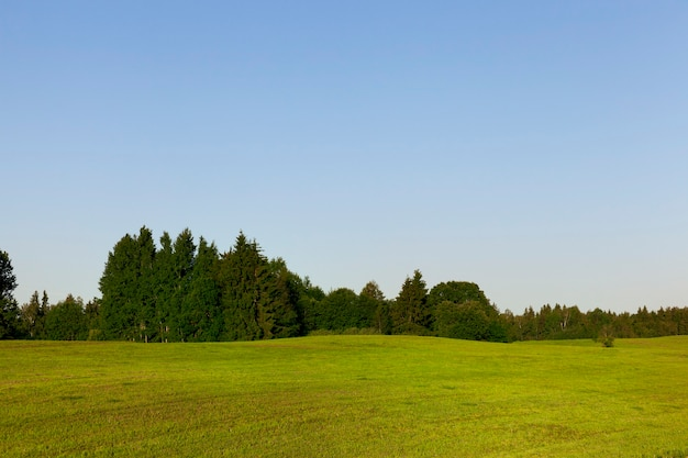 Área montanhosa em um campo agrícola com grama verde, ao fundo uma floresta cresce, uma paisagem de verão