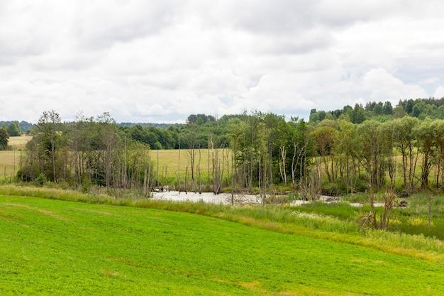 Área pantanosa com árvores baixas e grama verde, paisagem de verão ou primavera
