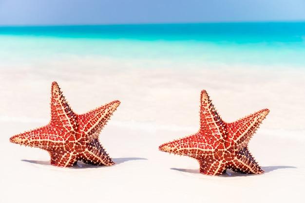 Areia branca tropical com estrela do mar vermelha em águas claras