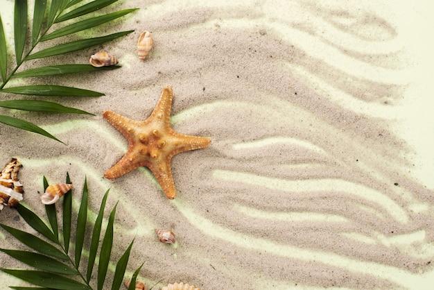 Areia com folhas e estrela do mar